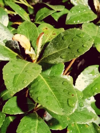 Leaf Nature Plant Close-up No People Outdoors Freshness Dew