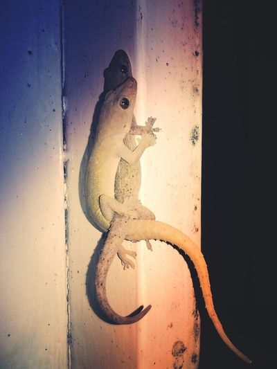 Night Life EyeEm Nature Lover Reptiles In Love  :-)
