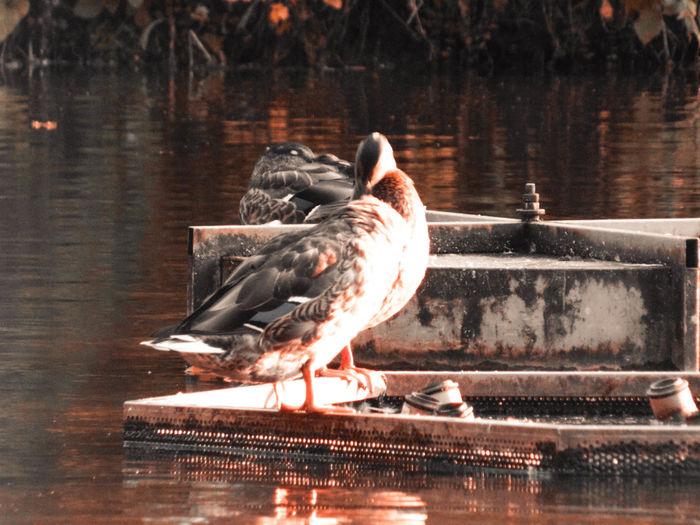 Lake Water Bird