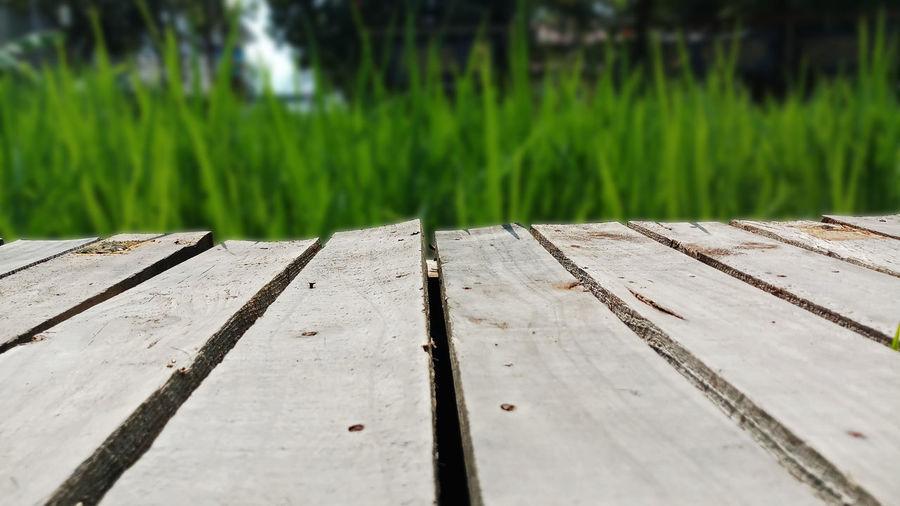 Plank wooden on field rice