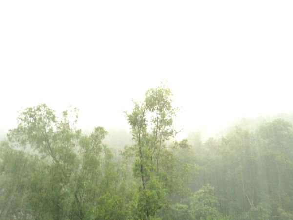 Rain season Tree Nature Green Color Rain Low Angle View No People Outdoors Huawei P9 Leica Plant
