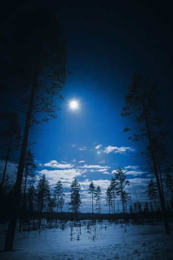 Fly me to the moon Tree Sky Moon Beauty In Nature Tranquil Scene Snow Nature Tranquility Winter Night Cold Temperature Scenics - Nature No People Moonlight Full Moon Low Angle View Outdoors Lapland Finland Tree Forest Clouds Cloud - Sky Clouds And Sky Blue Nightphotography Landscape Landscape_photography Photography Scenics Freshness Nature_collection Nature Photography Atmospheric Mood Star - Space Astronomy Taking Photos Hello World Hanging Out Check This Out Eye4photography  Pine Tree Woods Light And Shadow EyeEm Best Shots EyeEm Nature Lover Atmosphere Explore Low Angle View View Shadow Horizon Blue Sky Bright Abstract Exploring Calm Weather Arctic Scenery
