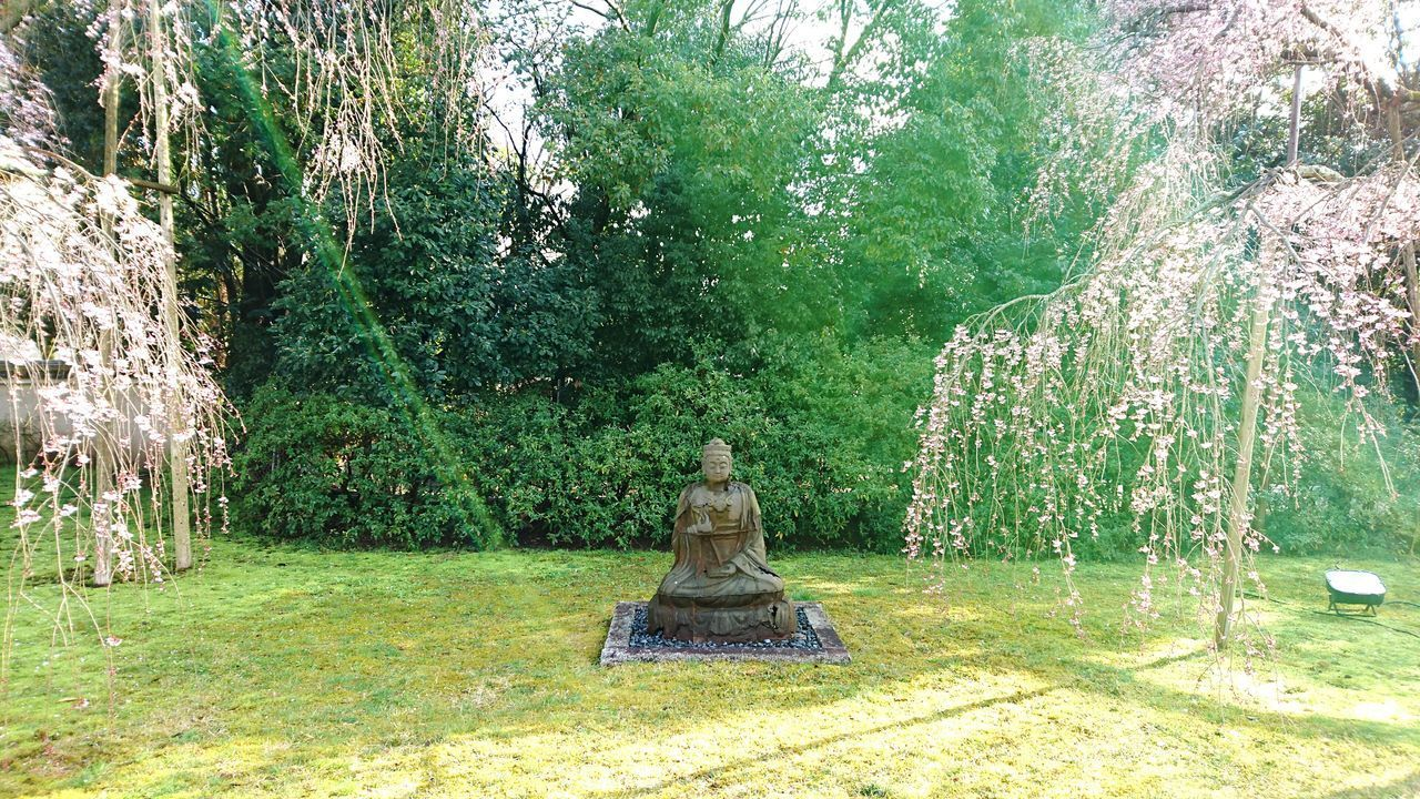tree, statue, nature, beauty in nature, human representation, sculpture, tranquility, day, green color, grass, growth, outdoors, no people