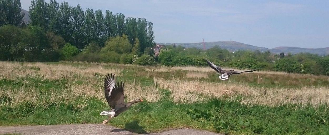 Bird flying over grass against sky