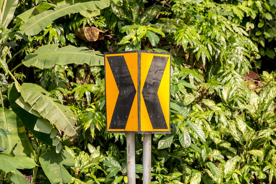 Two directional arrow road signs pointing towards each other with a tropical forest jungle back ground. Directional Sign Highway Signs Arrows Close-up Day Directional Forest Growth Jungle Leaf Nature No People Outdoors Plant Road Sign Yellow
