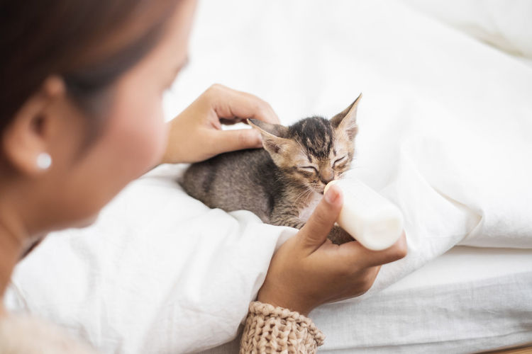 Close-up of woman feeding milk to kitten on bed at home