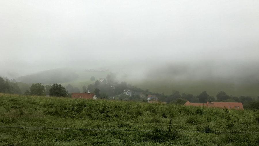 Fog Field Plant