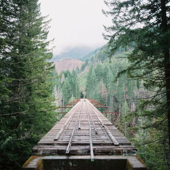{ Film } Vance Creek Bridge, Washington / Hasselblad 500C/M, Kodak Portra 400 Film Filmisnotdead Hasselblad Kodak