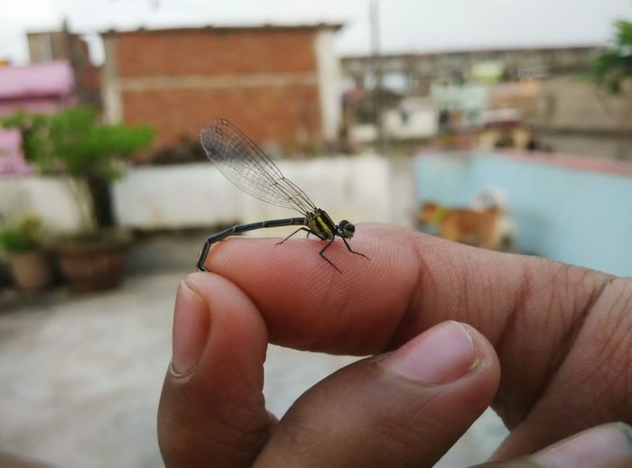 Taking Photos Hello World Eyem Gallery Eye4photography  Beauty In Nature Living Photography Insect Photography Focus On Macro Beauty Week On Eyeem The Week On Eyem Check This Out Moment INDIA✨ Patna Bihar Fly EyeEm Best Shots