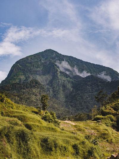Mt. Muria