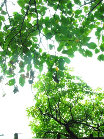 Tree Green Color Tree Nature