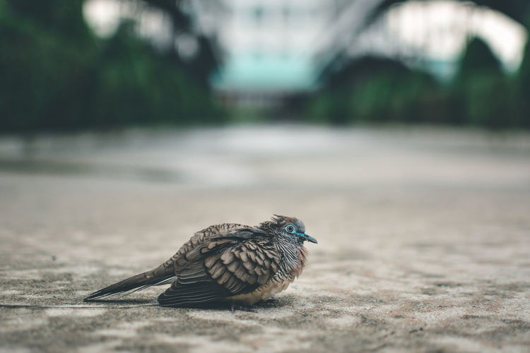 Animal Wildlife Animals In The Wild Animal Themes Animal One Animal Bird Vertebrate Day Selective Focus No People Focus On Foreground Nature Outdoors Perching Close-up Footpath Full Length Road Side View City