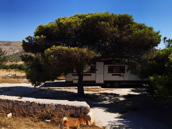 Tree Trailer