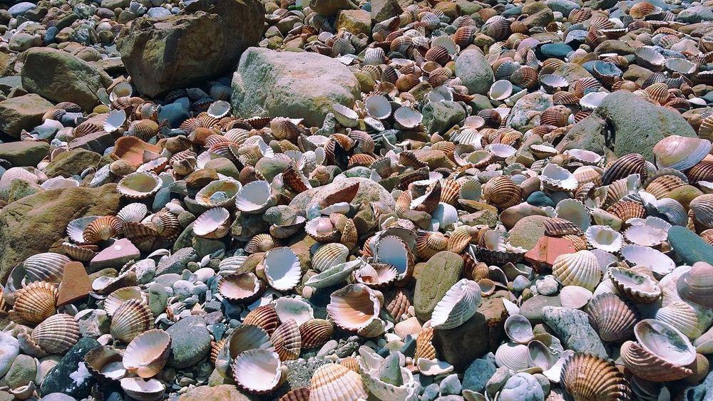 Shells🐚 Shells EyeEm Gallery Shell Beach Beach Beachphotography Eyeemphotography EyeEm Best Shots EyeEm Summer EyeEm Spain
