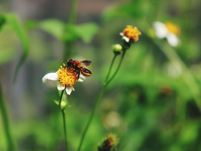 Flower Head Flower Bee Buzzing Pollination Nature Reserve Insect Uncultivated Petal Multi Colored