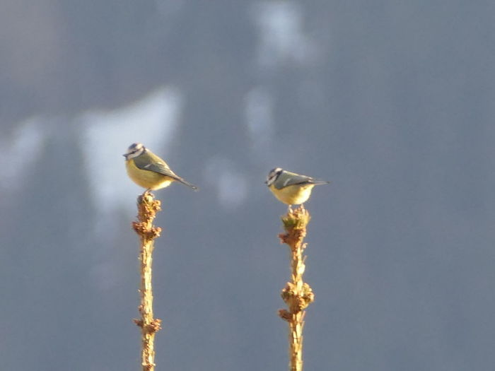 Low angle view of birds perching on a bird