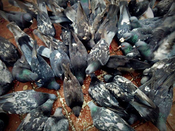 Full Frame Close-up No People Outdoors City Rostov-on-Don Doves Animal Themes Animal Pigeon Ростов-на-Дону голуби город птицы площадь кормитьголубей