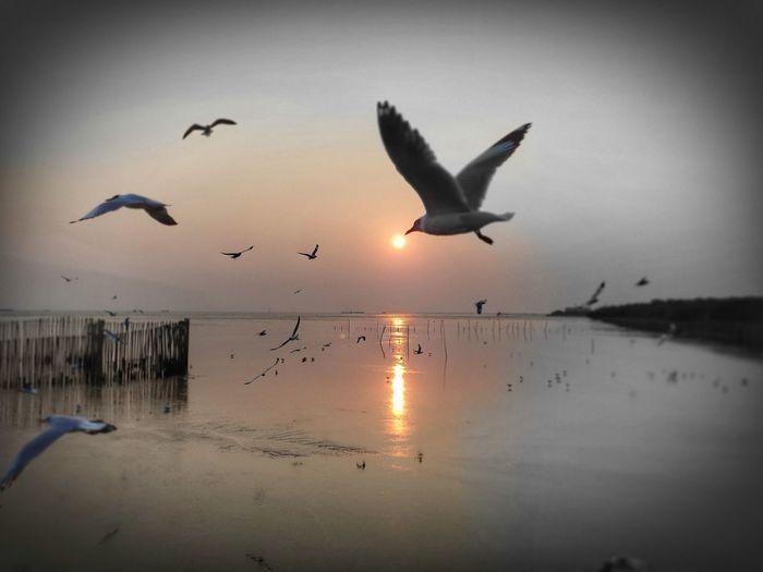 Bird Spread Wings Flamingo Water Flying Sunset Seagull Sea Flock Of Birds Silhouette