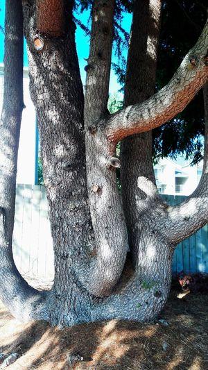 Tree Art Day
