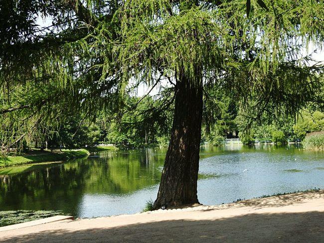 Larch Enjoying Life Sunny Day 🌞 Tavrichesky Garden Showcase July Summer Views Sankt-peterburg Russia Lake View