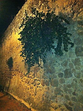 muro a secco Capperi Puglia Nature Vicoli