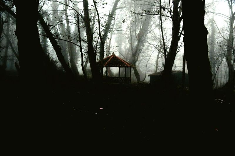 Fog Fog In The