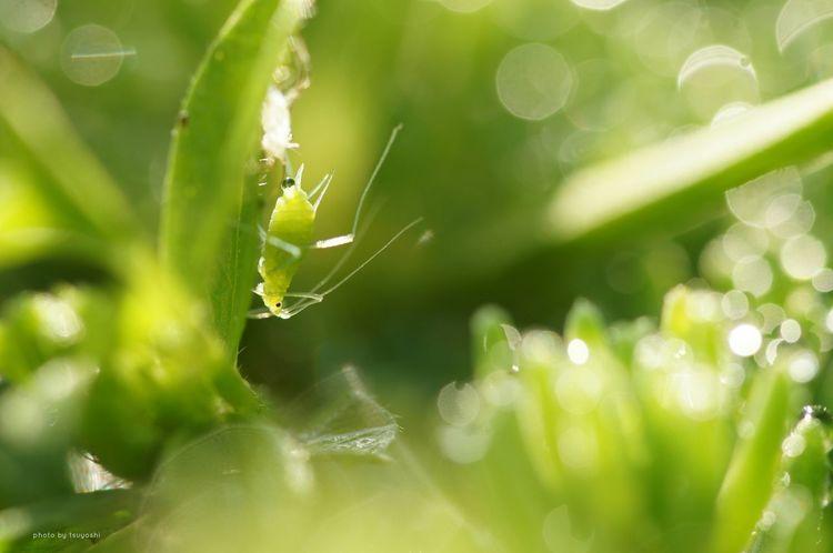 おはようございます(^o^)/ マクロ写真楽しい(≧∇≦) Sony α♡Love Plants 🌱 Insect Photography EyeEm Nature Lover Macro Photography Getting Inspired Water Drops Depth Of Field *CHIE*