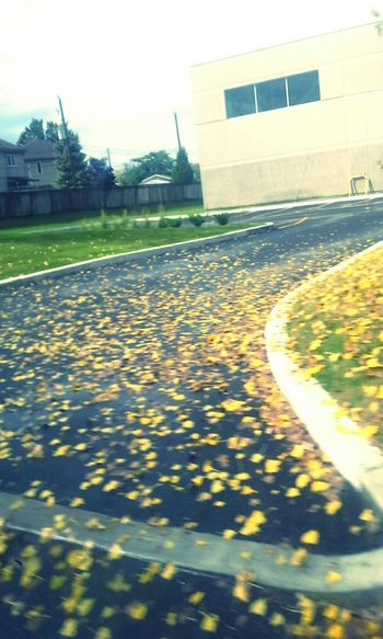Fall Leaves Fall Colors Fall_collection On The Road i found this on my way home. Fall Beauty
