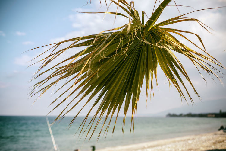Palm tree by sea against sky