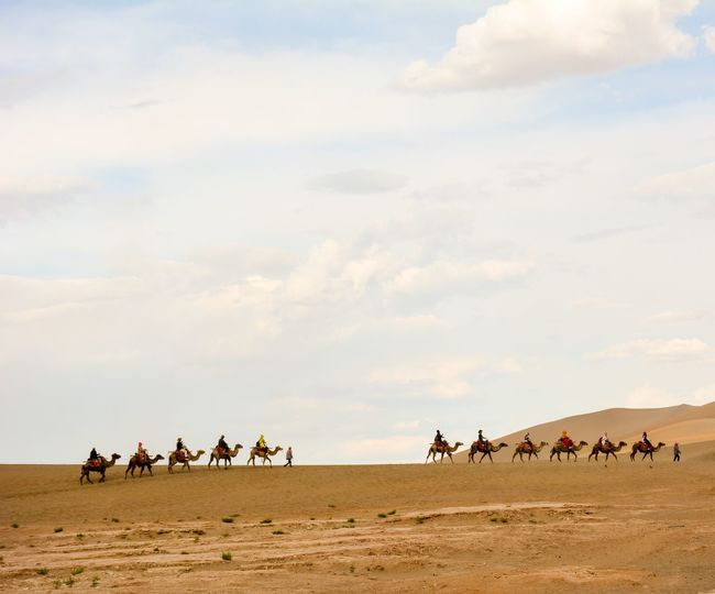 Camels On Sand Dune Against Sky