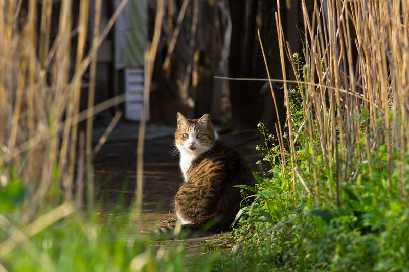 stray cat Animal In The Wild Cat Cat Lovers Field No People One Animal Stray Cat Wildlife