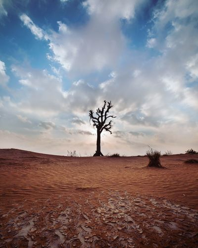 Sky Cloud - Sky Land Tree Plant Field Scenics - Nature Landscape Nature No People Growth Desert Single Tree Day Outdoors Tranquil Scene