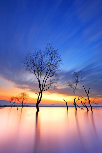 Cloud movement with dead trees on the dam at beautiful sunrise Bare Tree Scenics - Nature Tranquil Scene Tree Beauty In Nature Sky Tranquility Sunset Water Silhouette Branch No People Orange Color Nature Non-urban Scene Lake Plant Waterfront Cloud - Sky Outdoors Dead Plant Orange Sunrise Calm Tranquil Violet Asian  Dramatic Evening Evening Sky Travel Landscape Silhouette Purple Mystical Thailand Nature Reflection Dead Trees Nature Dead Trees In Water Branches And Sky Beautiful Beautiful Nature
