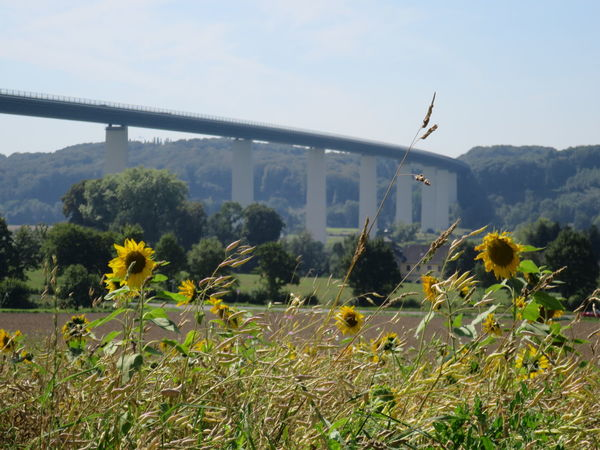 26.08.2016 Architecture Beauty In Nature Bridge Bridge - Man Made Structure Built Structure Connection Day Engineering Flower Fragility Freshness Green Color Growth In Front Of Nature No People Outdoors Plant Scenics Sky Sonnenblume Sunflower Sunflowers Sunflowers Field Tranquility
