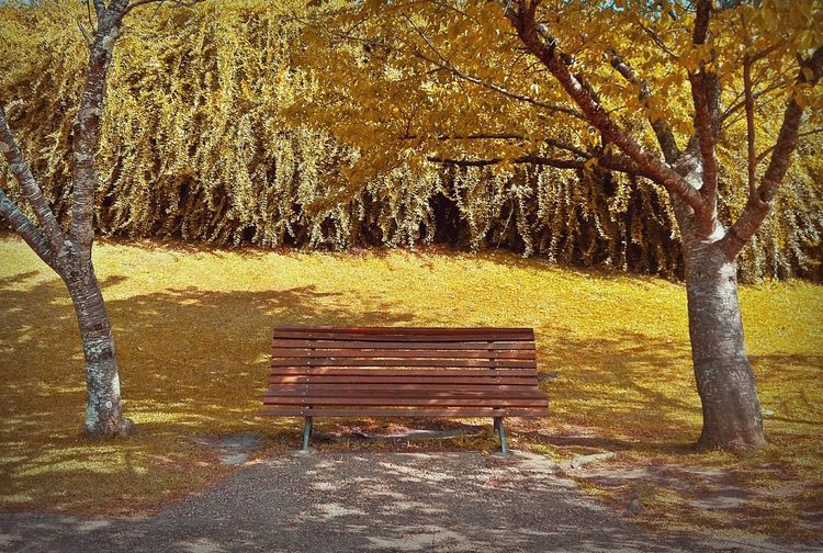 Flowers,Plants & Garden Nature Vintage Brazil EyeEm Nature Collection Photography Yellow Day Park Relaxing Garden Flowers Autumn Collection Autumn🍁🍁🍁 Tree Bench No People Sunlight Nature Outdoors