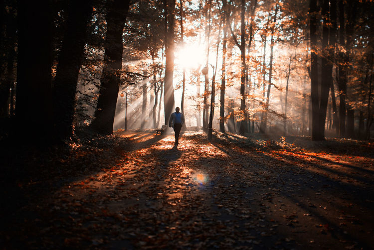 Man Walking At Forest During Autumn