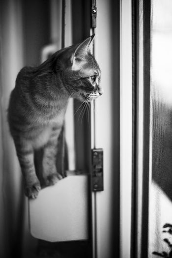 Cat looking away while sitting on window
