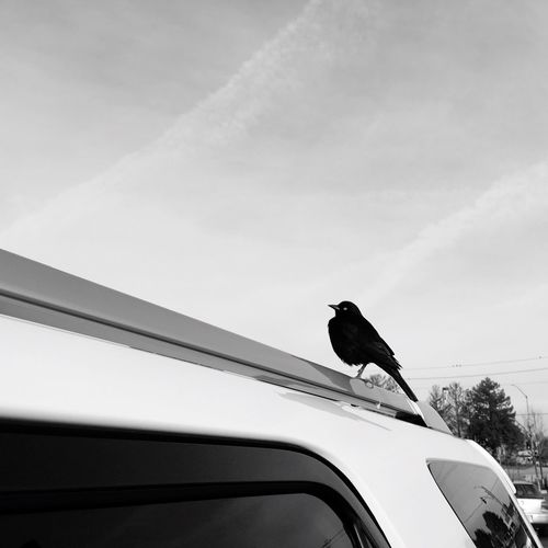 Low angle view of bird perching on car roof against sky