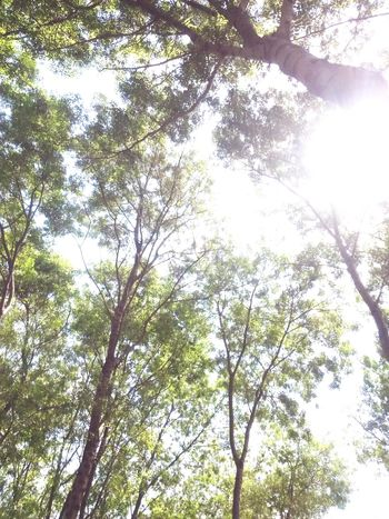 Göğe bakma durağı ışık Parıltı Photo Mavinintonları Blue And Green Trees Turkey EyeEm Istanbul Turkey Göğebakmadurağı Clouds And Sky EyeEm Gallery GöğeBakalım Mavi