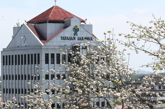 Yayasan Sarawak & Cotton Tree Cotton Tree Tree Architecture Branch Building Exterior Built Structure Cotton Day Flower Growth House Nature No People Outdoors Sky Tree