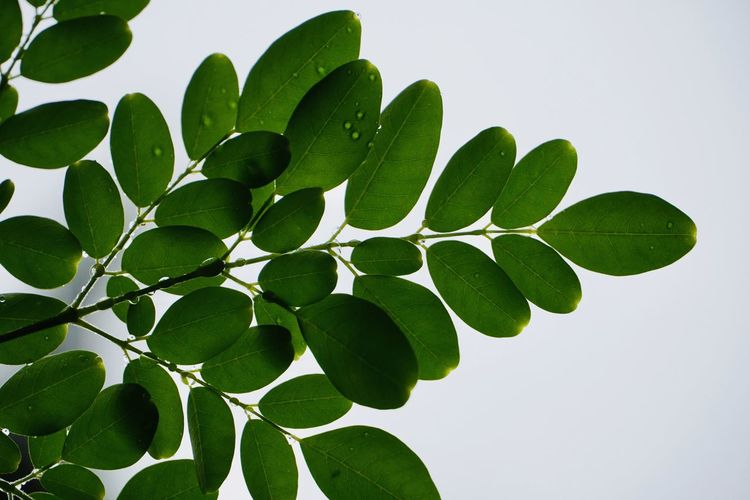 Low angle view of green leaves against sky