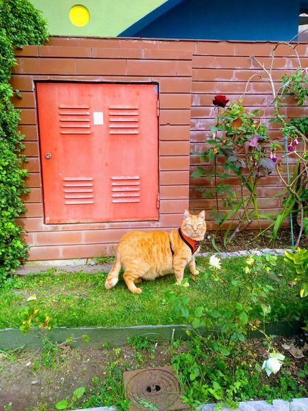 Streetphotography Urban The Street Photographer - 2018 EyeEm Awards Pets Grass Plant Feline Cat Domestic Cat