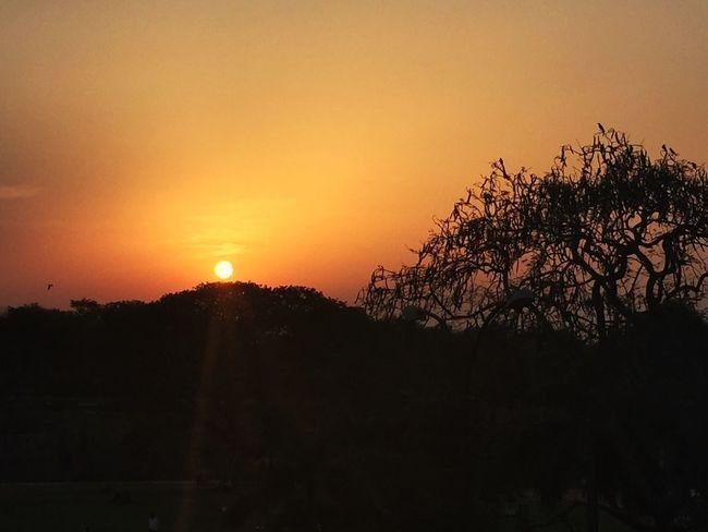 Outdoors Sunset Silhouettes Orange Color Nature Outline Tree Birds Sky Sun