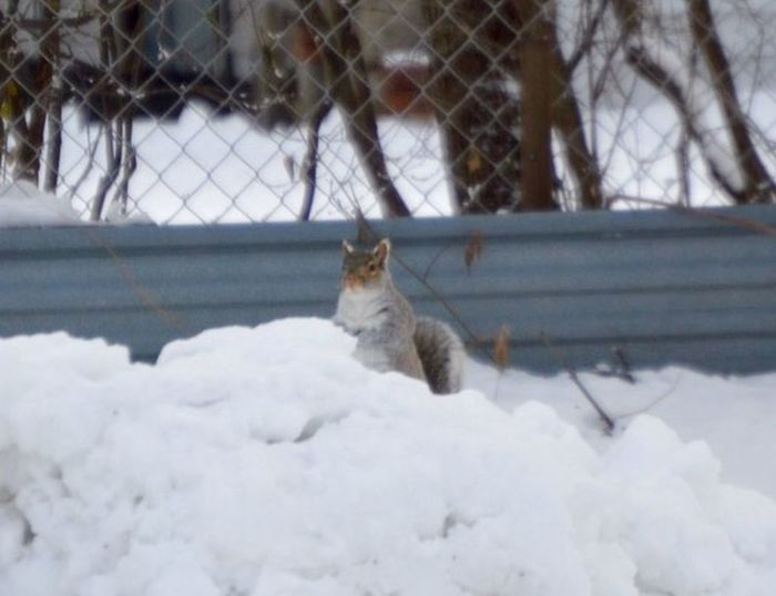 Squirrel Photography In Back Yard