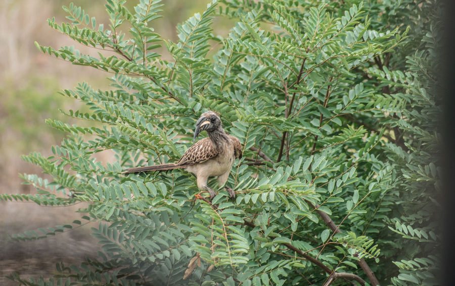 Animal Animal Themes Animal Wildlife Animals In The Wild Beauty In Nature Bird Day Green Color Growth Leaf Nature No People One Animal Outdoors Perching Plant Plant Part Selective Focus Tree Vertebrate