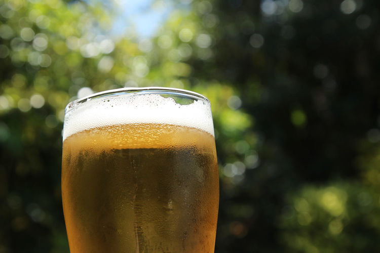 Close-up of beer glass against blurred background