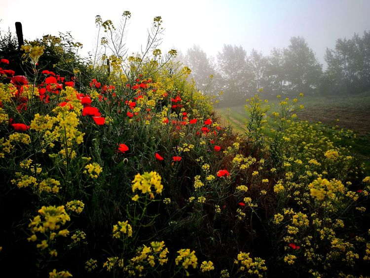Blumenwiese Frühsommer Foggy Day Flowers, Nature And Beauty