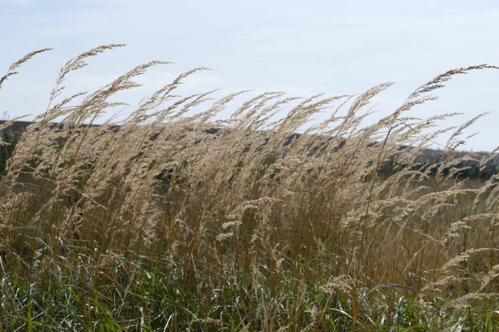 Landscape_Collection Sky Grass Grassy Grassland Grass Beauty In Nature Tall Grass Landscape