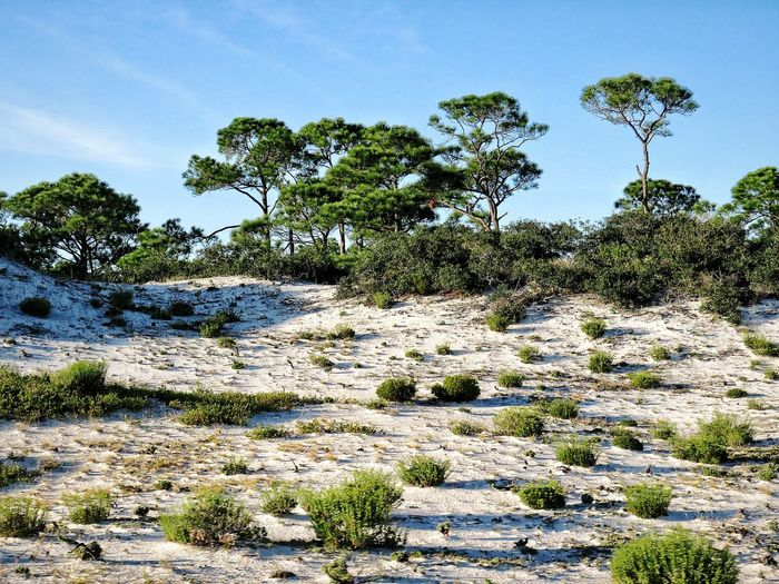Beach dunes Nature Outdoors Landscape Arid Climate Shrubs Greenery Tree Water Backgrounds Sky Close-up Plant Life Growing