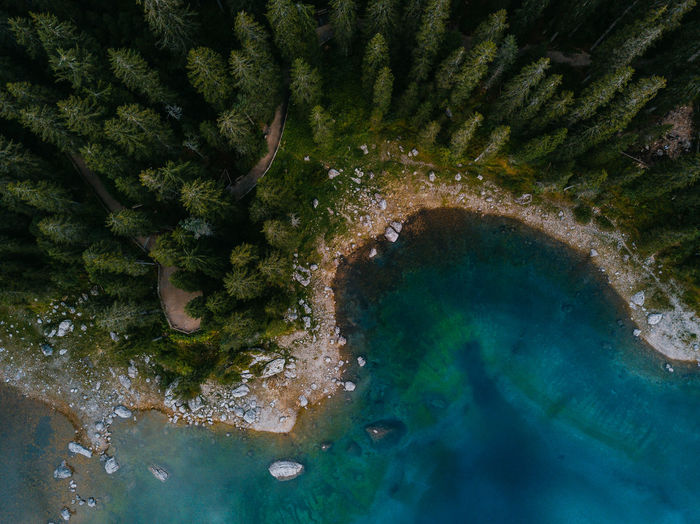 High angle view of trees growing by sea